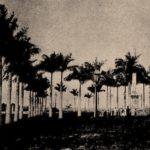 Foto (1902). Praça dos Remédios. Fonte: Revista do Norte, via: Blog Iba Mendes: Fotos antigas de cidades do Maranhão.